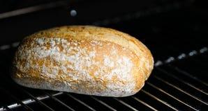 Πρόσφατα ψημένο κουλούρι ψωμιού Στοκ εικόνα με δικαίωμα ελεύθερης χρήσης