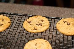 Πρόσφατα ψημένο μπισκότο τσιπ σοκολάτας Στοκ Εικόνες