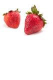 πρόσφατα ώριμες φράουλες Στοκ Φωτογραφίες