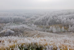 Πρόσφατο τοπίο φθινοπώρου με τις παγωμένα εγκαταστάσεις και τα δέντρα Στοκ Εικόνα