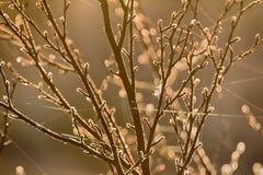 Πρόσφατο φθινόπωρο, παγετοί πρωινού Ινδικό καλοκαίρι Ιστού Στοκ φωτογραφία με δικαίωμα ελεύθερης χρήσης