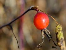 Πρόσφατο φθινόπωρο στο δάσος Στοκ Εικόνα