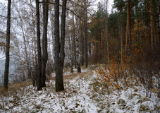 Πρόσφατο φθινόπωρο στοκ φωτογραφίες με δικαίωμα ελεύθερης χρήσης