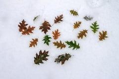 Πρόσφατο φθινόπωρο Στοκ Εικόνες