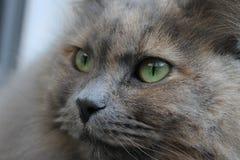 πρόσωπο γατών στοκ εικόνα