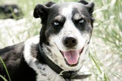 Πρόσωπο ενός σκυλιού Στοκ φωτογραφία με δικαίωμα ελεύθερης χρήσης