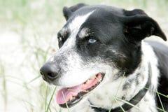 Πρόσωπο ενός σκυλιού Στοκ εικόνα με δικαίωμα ελεύθερης χρήσης