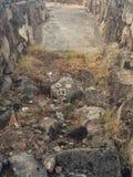 Πρόσωπο ενός χοίρου που χαρακτηρίζεται σε έναν βράχο Στοκ Εικόνες