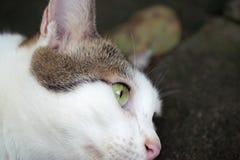 Πρόσωπο κινηματογραφήσεων σε πρώτο πλάνο της τιγρέ γάτας που ψάχνει κάποιο να ενδιαφέρει στο σκοτεινό φ στοκ εικόνες