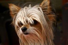 πρόσωπο σκυλιών κινηματο&g Στοκ εικόνες με δικαίωμα ελεύθερης χρήσης