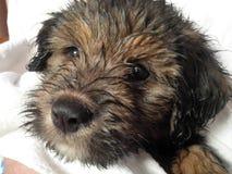 Πρόσωπο σκυλιών κουταβιών Στοκ εικόνες με δικαίωμα ελεύθερης χρήσης