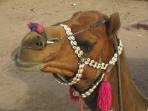 Πρόσωπο της καφετιάς καμήλας στοκ εικόνα με δικαίωμα ελεύθερης χρήσης