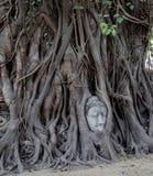 Πρόσωπο του Βούδα σε ένα δέντρο Banyan στοκ φωτογραφία με δικαίωμα ελεύθερης χρήσης