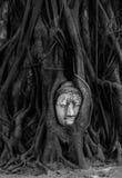 Πρόσωπο του Βούδα Στοκ εικόνα με δικαίωμα ελεύθερης χρήσης