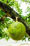 Πρόσωπο των φρούτων στο δέντρο πράσινο Στοκ φωτογραφία με δικαίωμα ελεύθερης χρήσης
