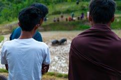 Πρόσωπο δύο από πίσω από να προσέξει δύο βούβαλους μέσα στοκ εικόνα με δικαίωμα ελεύθερης χρήσης