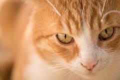 πρόσωπο s γατών Στοκ Φωτογραφία