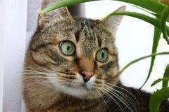 πρόσωπο s γατών Στοκ Εικόνα
