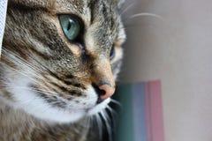 πρόσωπο s γατών Στοκ φωτογραφίες με δικαίωμα ελεύθερης χρήσης