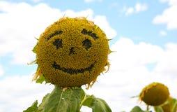 Πρόσωπο Smiley ηλίανθων Στοκ φωτογραφία με δικαίωμα ελεύθερης χρήσης