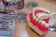 Πρότυπα δόντια   Στοκ εικόνα με δικαίωμα ελεύθερης χρήσης