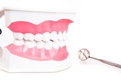 Πρότυπα και οδοντικά όργανα δοντιών Στοκ Εικόνα