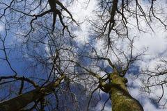 Πρότυπα της φύσης Στοκ Φωτογραφίες