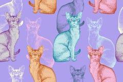 πρότυπο άνευ ραφής Πολύχρωμες γάτες Σύγχρονο ύφος Στοκ φωτογραφία με δικαίωμα ελεύθερης χρήσης