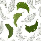 πρότυπο άνευ ραφής Πράσινο άσπρο υπόβαθρο φύλλων μπανανών Στοκ εικόνες με δικαίωμα ελεύθερης χρήσης