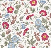 πρότυπο άνευ ραφής Ρεαλιστικά απομονωμένα λουλούδια Εκλεκτής ποιότητας διάνυσμα χάραξης σχεδίων primavera πετουνιών υποβάθρου hib Στοκ Εικόνα