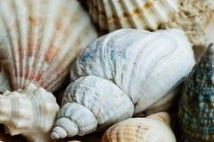 Πρότυπο ανασκόπησης κοχυλιών θάλασσας Στοκ εικόνες με δικαίωμα ελεύθερης χρήσης