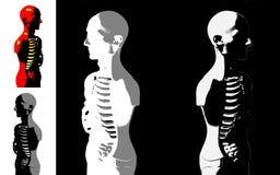 Πρότυπο ανατομίας ανθρώπινου σώματος Στοκ φωτογραφίες με δικαίωμα ελεύθερης χρήσης