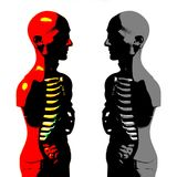 Πρότυπο ανατομίας ανθρώπινου σώματος Στοκ Εικόνες