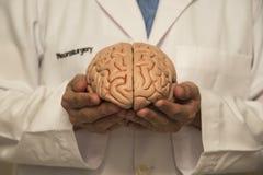 Πρότυπο γιατρών και εγκεφάλου Στοκ φωτογραφία με δικαίωμα ελεύθερης χρήσης