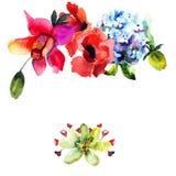 Πρότυπο για την κάρτα με με το όμορφο λουλούδι Hydrangea και παπαρουνών διανυσματική απεικόνιση
