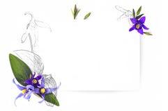 Πρότυπο για το σχέδιο πρόσκλησης με τα φρέσκα clematis λουλουδιών και το περίγραμμα μελανιού Στοκ Φωτογραφία