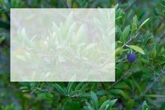 Πρότυπο διαφανές για το περιεχόμενο r o E Ένας κλάδος ελιών με τις ελιές στοκ εικόνα