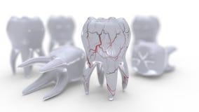 Πρότυπο και φλέβες δοντιών στην άσπρη, τρισδιάστατη απόδοση ελεύθερη απεικόνιση δικαιώματος