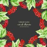 Πρότυπο καρτών με τους κλάδους viburnum watercolor, σύνορα πλαισίων Στοκ Εικόνες