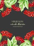 Πρότυπο καρτών με τους κλάδους viburnum watercolor Στοκ Εικόνες