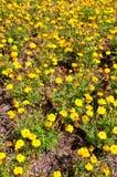 πρότυπο λουλουδιών κόσμου Στοκ Φωτογραφία
