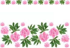 πρότυπο λουλουδιών peony Στοκ Εικόνα