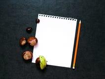 Πρότυπο με τα κάστανα και ένα φύλλο του εγγράφου Στοκ φωτογραφία με δικαίωμα ελεύθερης χρήσης