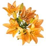 Πρότυπο λουλουδιών Στοκ φωτογραφία με δικαίωμα ελεύθερης χρήσης