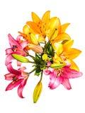 Πρότυπο λουλουδιών Στοκ Φωτογραφίες