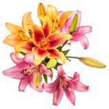 Πρότυπο λουλουδιών Στοκ Φωτογραφία