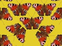 πρότυπο πεταλούδων άνευ ρ& στοκ φωτογραφίες με δικαίωμα ελεύθερης χρήσης