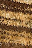 πρότυπο σκουριασμένο Στοκ Φωτογραφίες