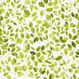 πρότυπο φύλλων άνευ ραφής watercolor Στοκ εικόνες με δικαίωμα ελεύθερης χρήσης