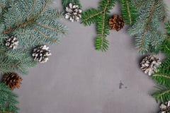 Πρότυπο Χριστουγέννων με τους κλάδους έλατου και τους κώνους πεύκων Στοκ φωτογραφίες με δικαίωμα ελεύθερης χρήσης